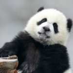 Google Panda Update – The Bear of the SEO Industry